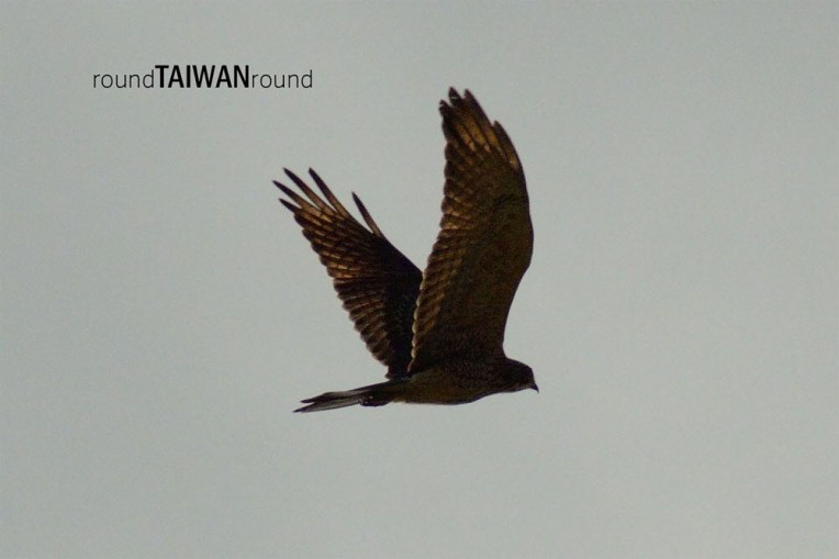 Langjiao Eagle-Watching Season.jpg