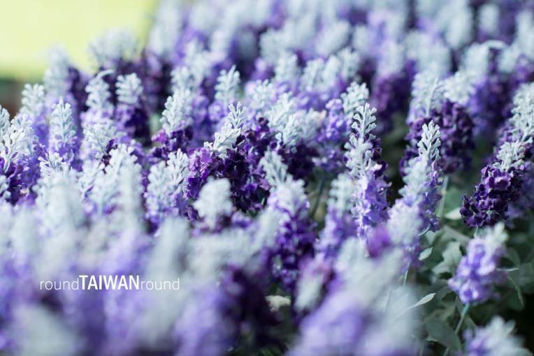 Lavender Cottage (薰衣草森林)-077.jpg