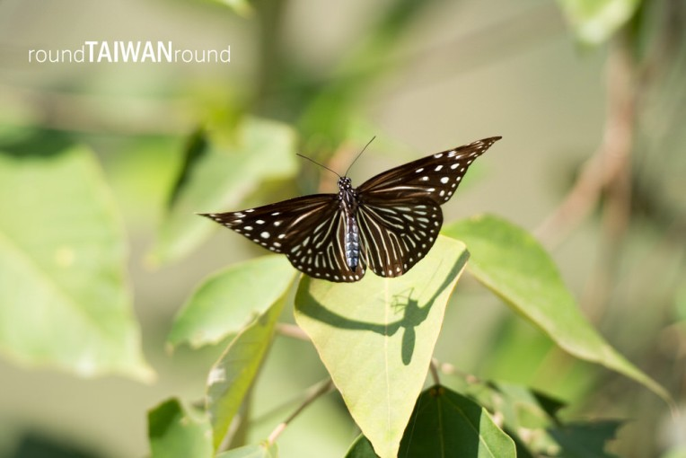 Maolin Butterfly Walkway (茂林賞蝶步道)-018.jpg