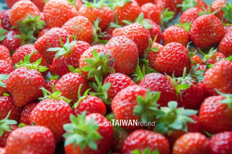 Strawberry Picking Fenglin (鳳林採草莓)-002.jpg