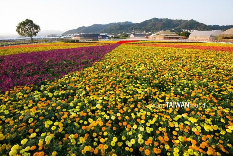 Xinshe Sea of Flowers (新社花海)-013.jpg